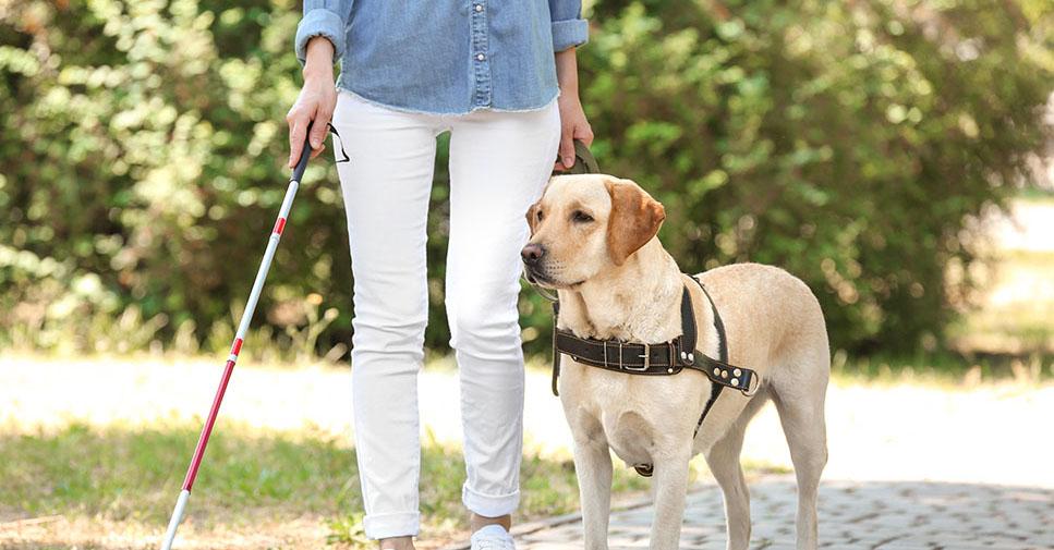 Vrouw met stok en geleidehond